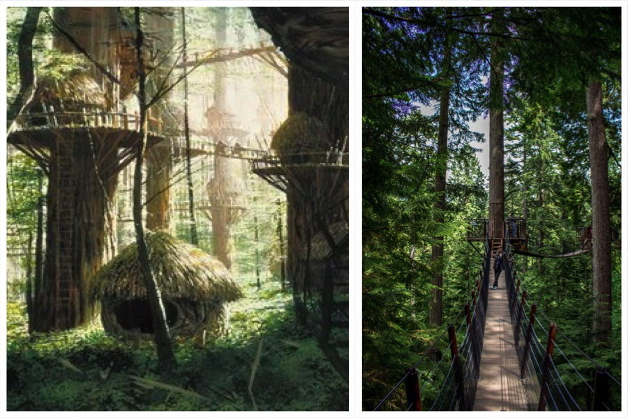 Ewok Village Caplilano Suspension Bridge Comparison
